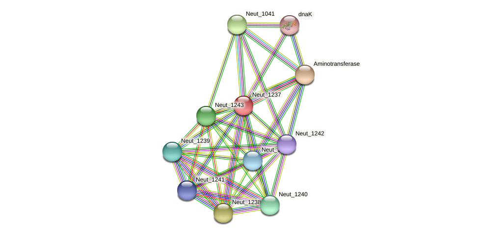 Neut_1237 protein (Nitrosomonas eutropha) - STRING interaction network