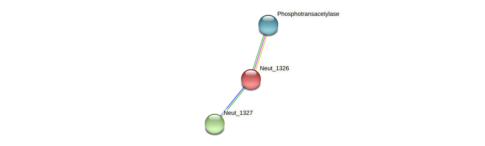 Neut_1326 protein (Nitrosomonas eutropha) - STRING interaction network