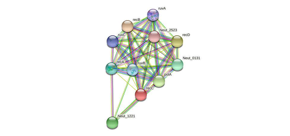 recC protein (Nitrosomonas eutropha) - STRING interaction network