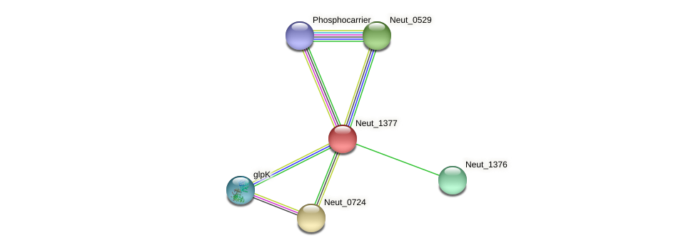 Neut_1377 protein (Nitrosomonas eutropha) - STRING interaction network