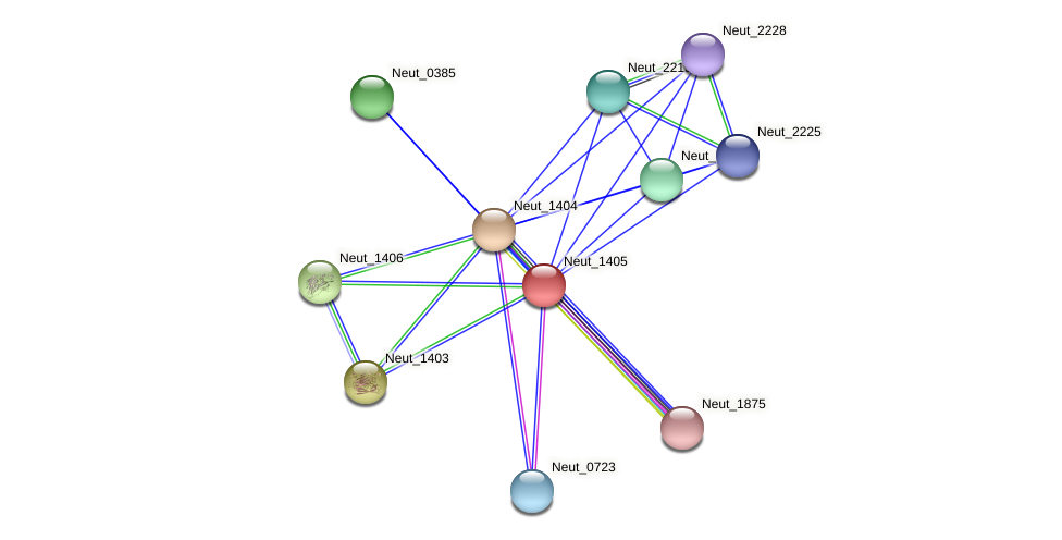 Neut_1405 protein (Nitrosomonas eutropha) - STRING interaction network