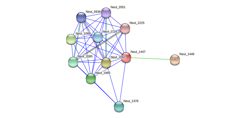 Neut_1447 protein (Nitrosomonas eutropha) - STRING interaction network