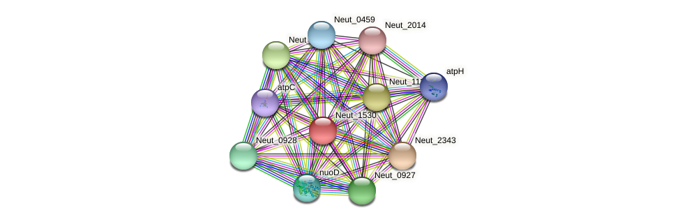 Neut_1530 protein (Nitrosomonas eutropha) - STRING interaction network