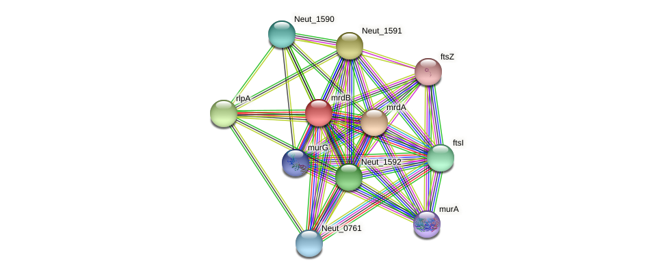 Neut_1588 protein (Nitrosomonas eutropha) - STRING interaction network