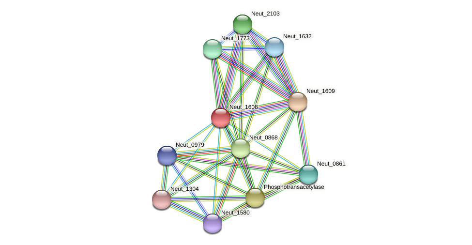 Neut_1608 protein (Nitrosomonas eutropha) - STRING interaction network