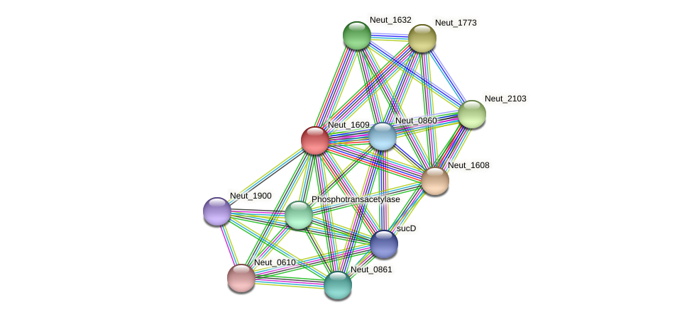 Neut_1609 protein (Nitrosomonas eutropha) - STRING interaction network