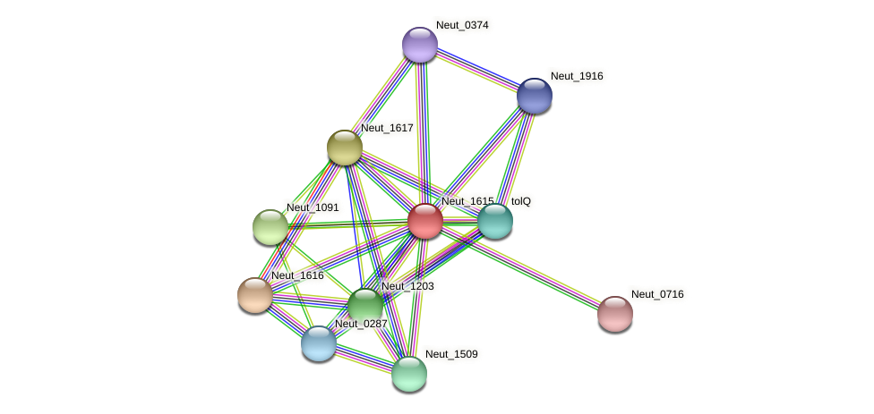 Neut_1615 protein (Nitrosomonas eutropha) - STRING interaction network