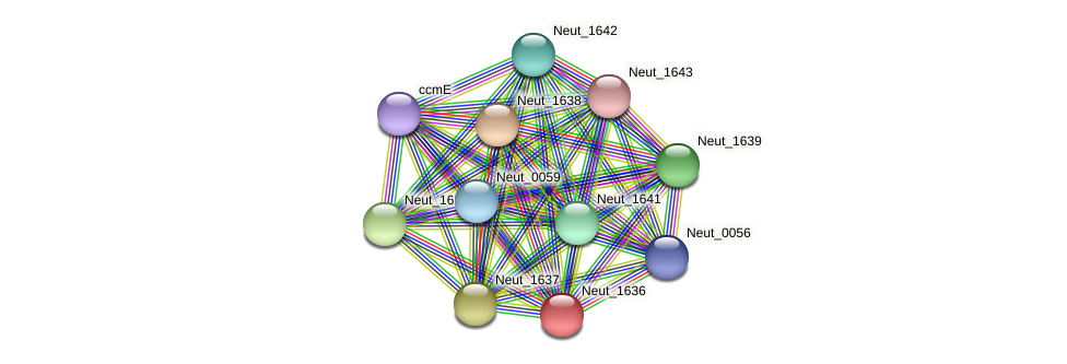 Neut_1636 protein (Nitrosomonas eutropha) - STRING interaction network