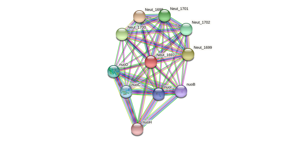 Neut_1697 protein (Nitrosomonas eutropha) - STRING interaction network