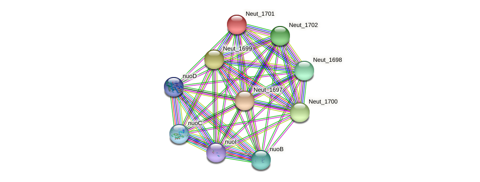 Neut_1701 protein (Nitrosomonas eutropha) - STRING interaction network