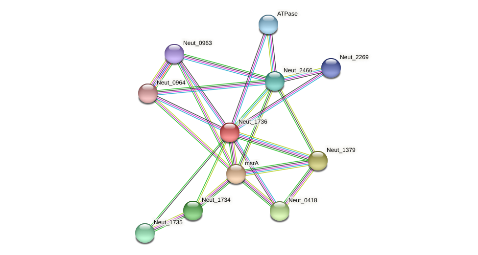 Neut_1736 protein (Nitrosomonas eutropha) - STRING interaction network