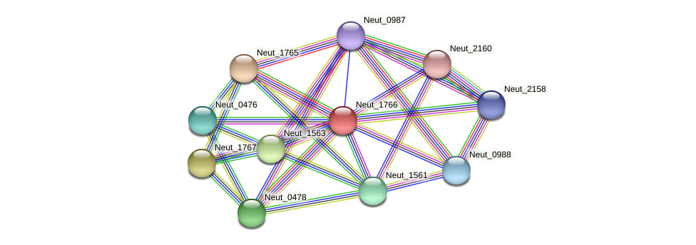 Neut_1766 protein (Nitrosomonas eutropha) - STRING interaction network