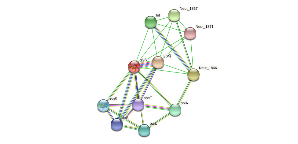 glyS protein (Nitrosomonas eutropha) - STRING interaction network