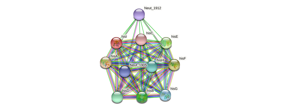 hisI protein (Nitrosomonas eutropha) - STRING interaction network