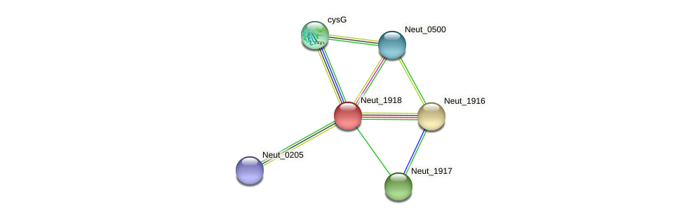 Neut_1918 protein (Nitrosomonas eutropha) - STRING interaction network