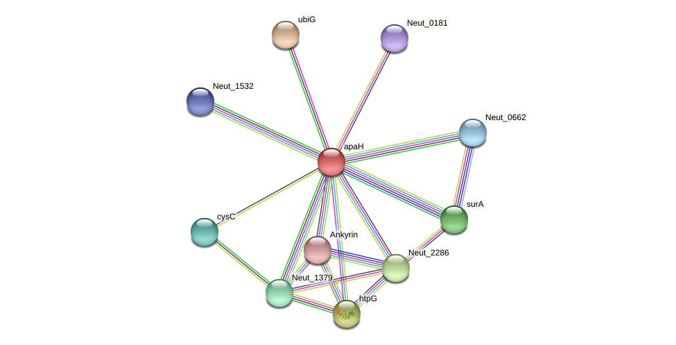 apaH protein (Nitrosomonas eutropha) - STRING interaction network