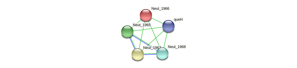 Neut_1966 protein (Nitrosomonas eutropha) - STRING interaction network
