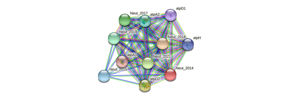 Neut_2014 protein (Nitrosomonas eutropha) - STRING interaction network