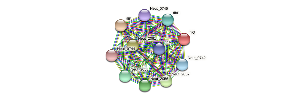 Neut_2060 protein (Nitrosomonas eutropha) - STRING interaction network
