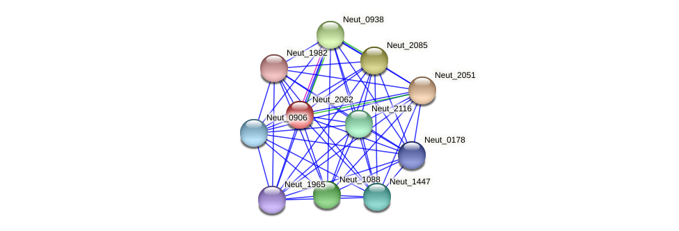 Neut_2062 protein (Nitrosomonas eutropha) - STRING interaction network