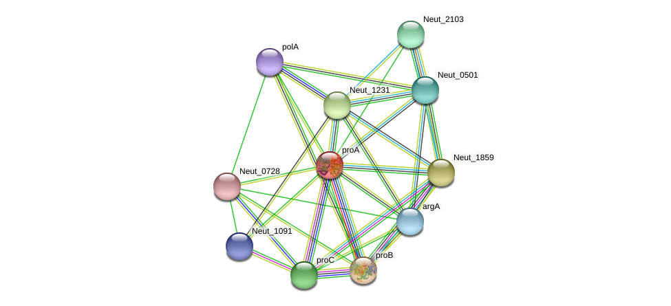 proA protein (Nitrosomonas eutropha) - STRING interaction network