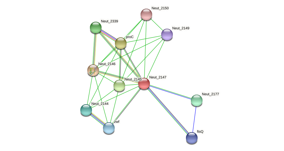 Neut_2147 protein (Nitrosomonas eutropha) - STRING interaction network