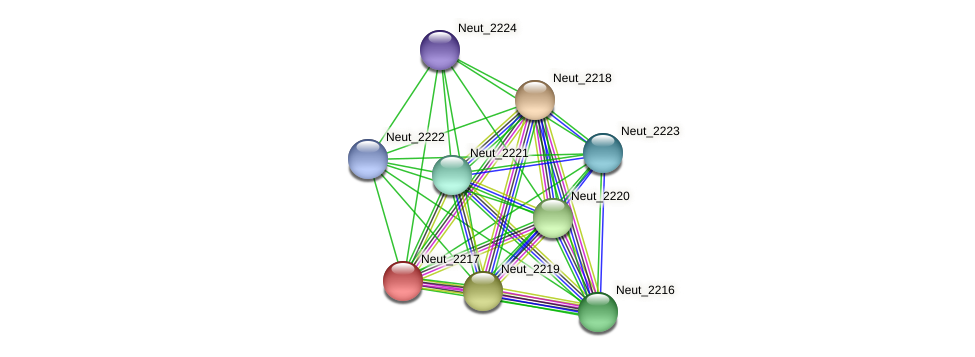Neut_2217 protein (Nitrosomonas eutropha) - STRING interaction network
