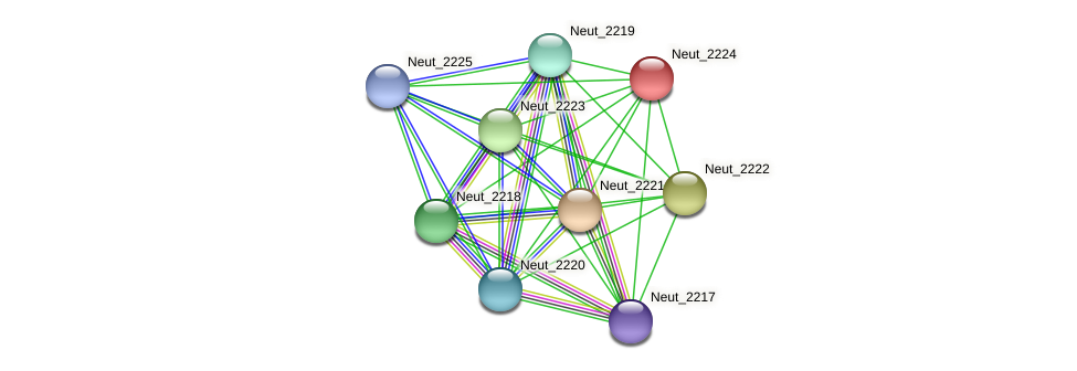 Neut_2224 protein (Nitrosomonas eutropha) - STRING interaction network