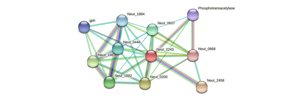 Neut_2243 protein (Nitrosomonas eutropha) - STRING interaction network
