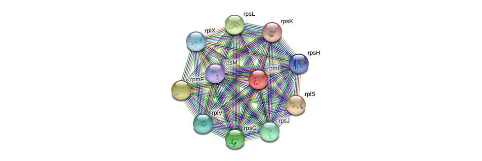rpmI protein (Nitrosomonas eutropha) - STRING interaction network