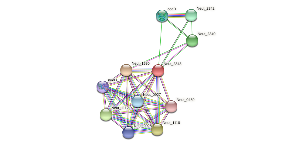 Neut_2343 protein (Nitrosomonas eutropha) - STRING interaction network