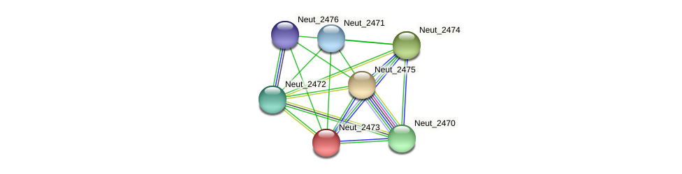 Neut_2473 protein (Nitrosomonas eutropha) - STRING interaction network