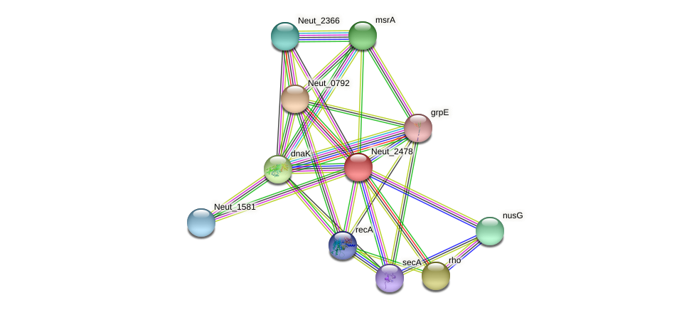 Neut_2478 protein (Nitrosomonas eutropha) - STRING interaction network