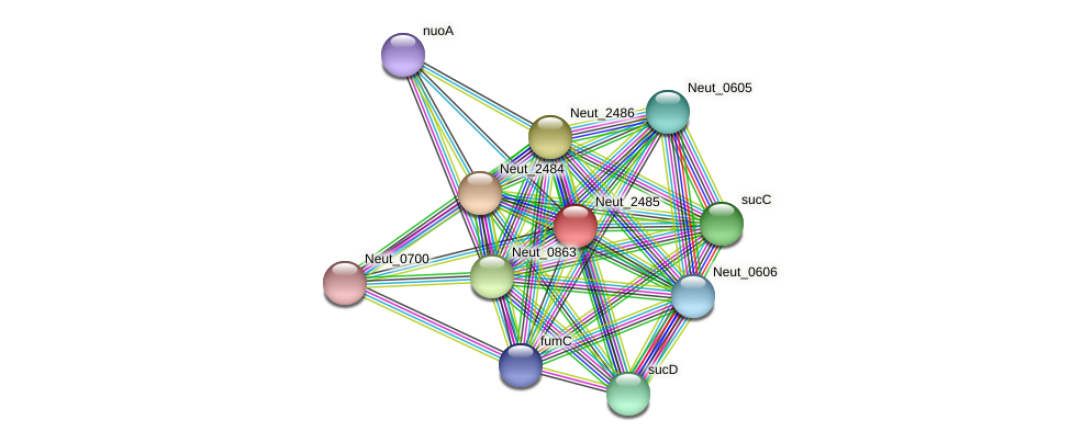 Neut_2485 protein (Nitrosomonas eutropha) - STRING interaction network