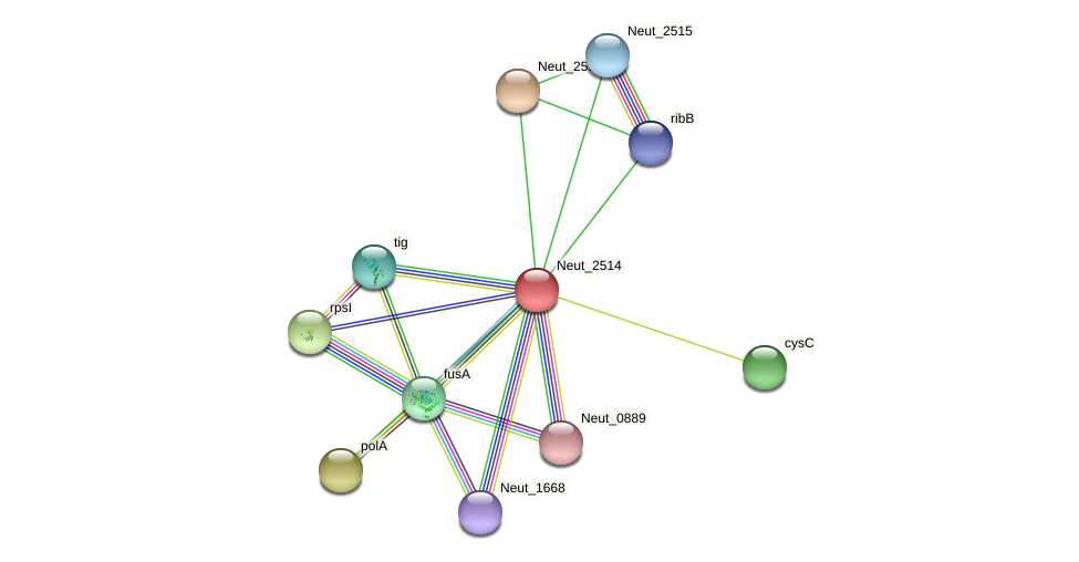 Neut_2514 protein (Nitrosomonas eutropha) - STRING interaction network