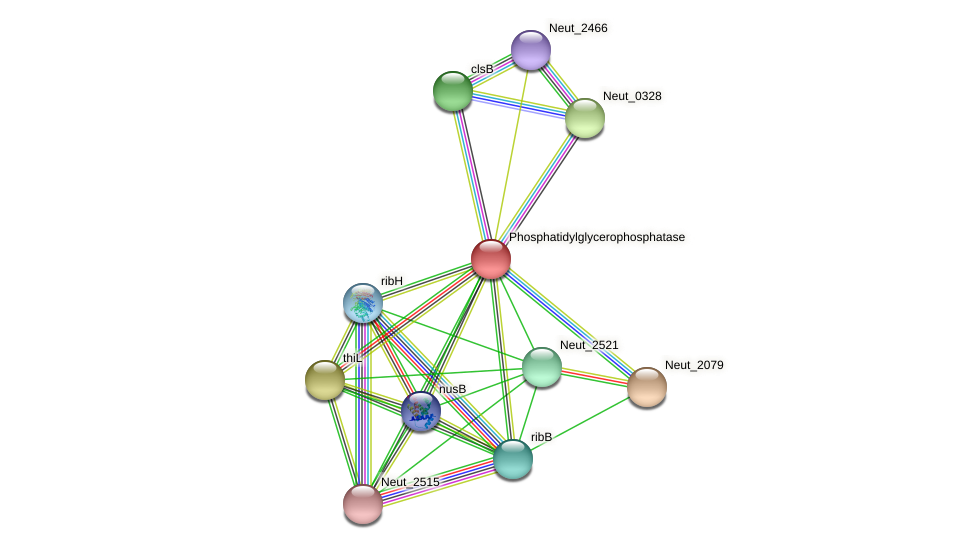 Neut_2520 protein (Nitrosomonas eutropha) - STRING interaction network