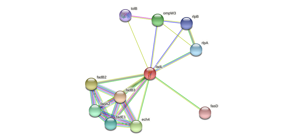 fadL protein (Xanthomonas campestris campestris) - STRING interaction network