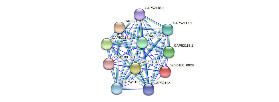 XCC0023 protein (Xanthomonas campestris campestris) - STRING interaction network