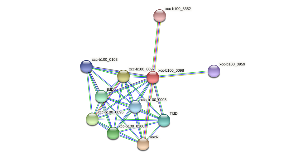 XCC0090 protein (Xanthomonas campestris campestris) - STRING interaction network