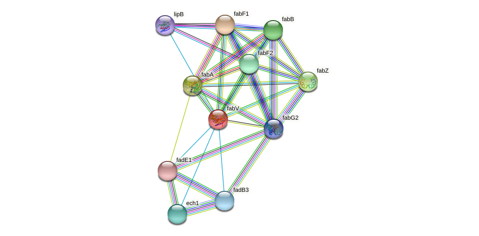 fabV protein (Xanthomonas campestris campestris) - STRING interaction network