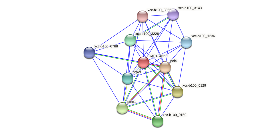CAP49462.1 protein (Xanthomonas campestris campestris) - STRING interaction network