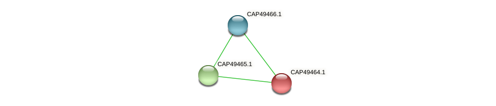 CAP49464.1 protein (Xanthomonas campestris campestris) - STRING interaction network