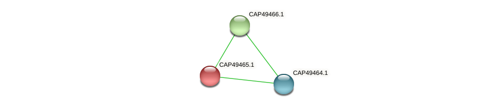 CAP49465.1 protein (Xanthomonas campestris campestris) - STRING interaction network