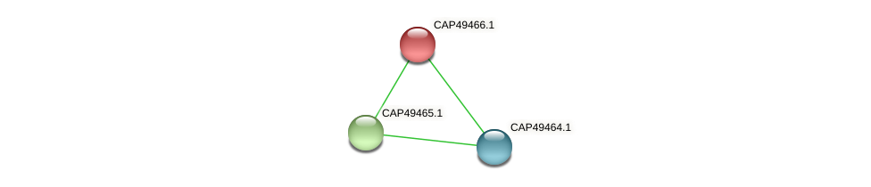 CAP49466.1 protein (Xanthomonas campestris campestris) - STRING interaction network