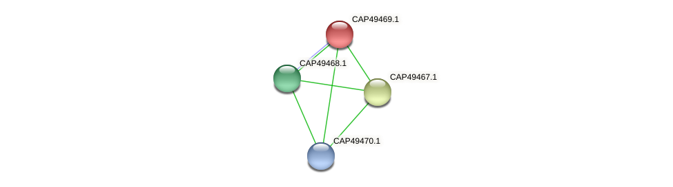CAP49469.1 protein (Xanthomonas campestris campestris) - STRING interaction network
