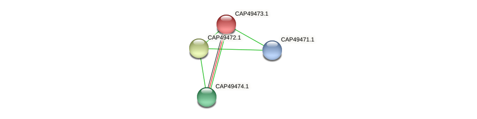 CAP49473.1 protein (Xanthomonas campestris campestris) - STRING interaction network