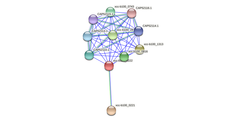 XCC0201 protein (Xanthomonas campestris campestris) - STRING interaction network