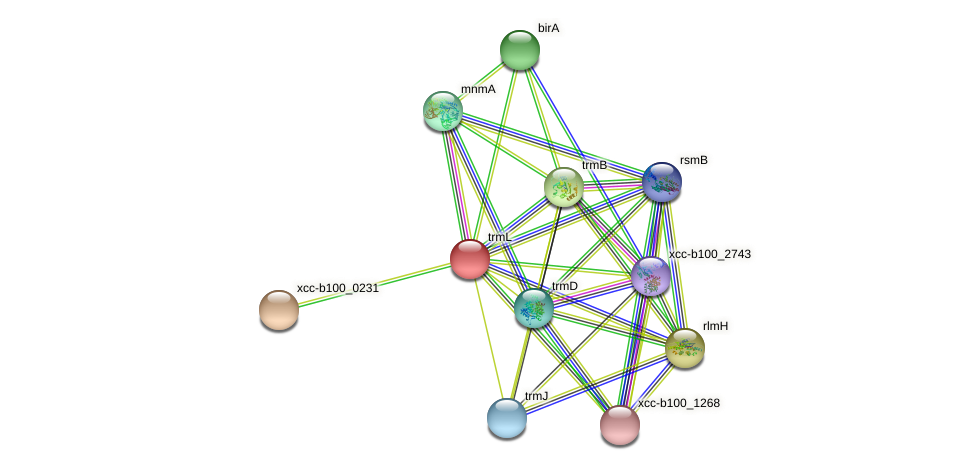 trmL protein (Xanthomonas campestris campestris) - STRING interaction network