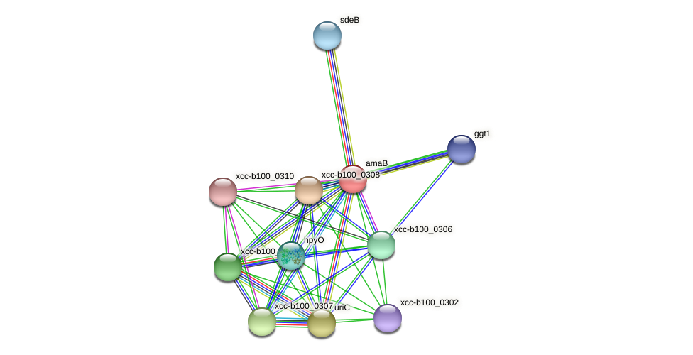 amaB protein (Xanthomonas campestris campestris) - STRING interaction network