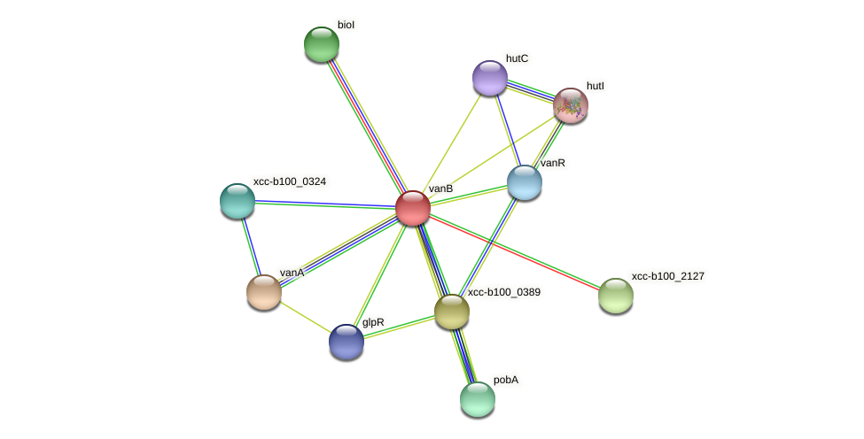 vanB protein (Xanthomonas campestris campestris) - STRING interaction network